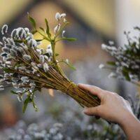 Синоптики прогнозують у вербну неділю в Україні дощі, посилення вітру та заморозки