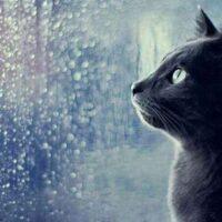 Синоптики: В Україні збережеться тепла дощова погода