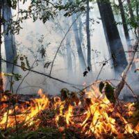 У 7 областях України оголошено надзвичайну пожежну небезпеку
